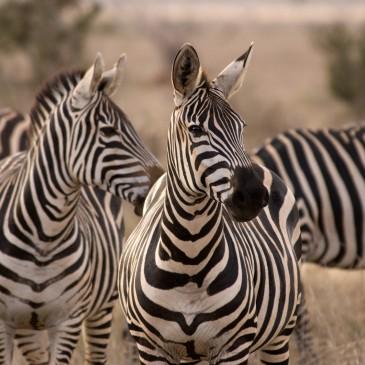 Le Migliori Destinazioni per i Safari nel mondo – Parte 1